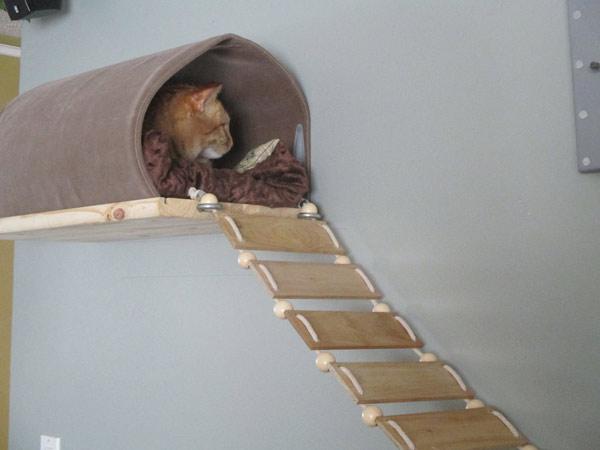 лесенка для кошки своими руками